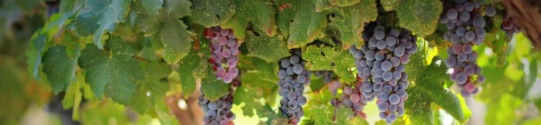 Les vins bio Daniel Boccard