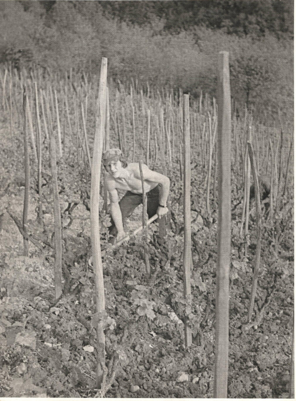 Daniel dans les vignes en 1977